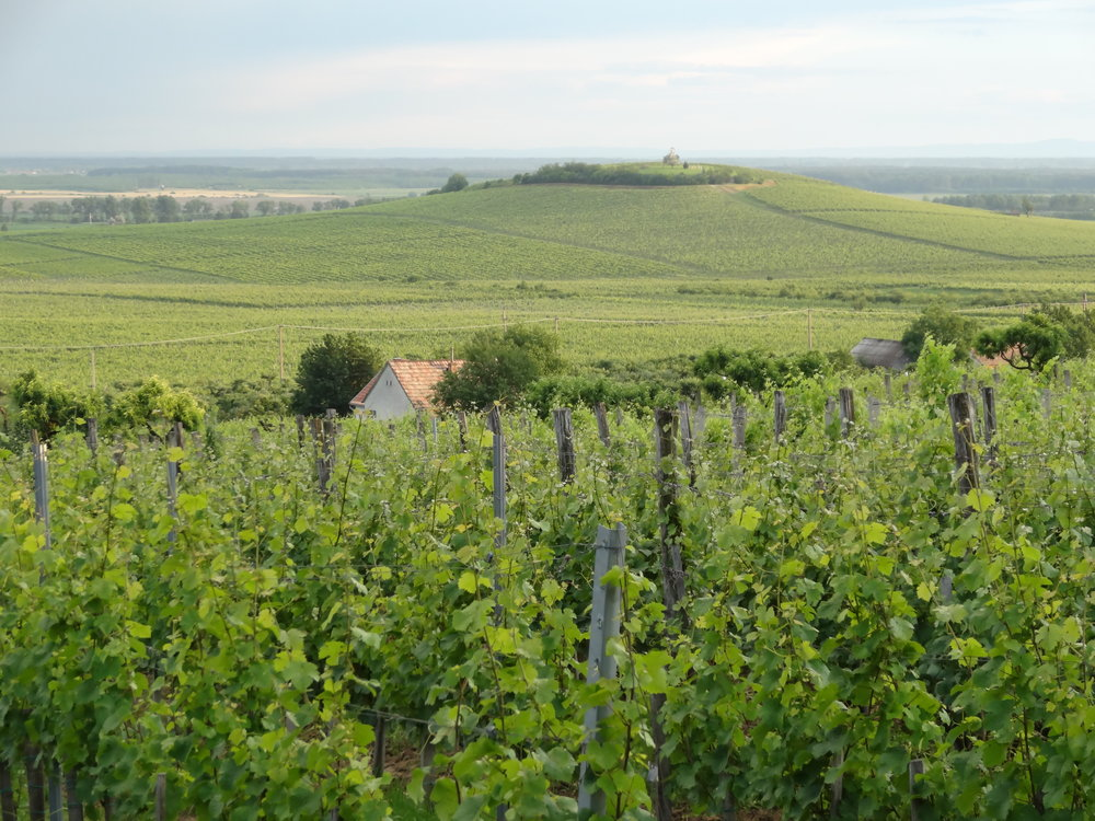 Wanderlust Wines 4.JPG