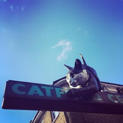Catford Cat.jpg