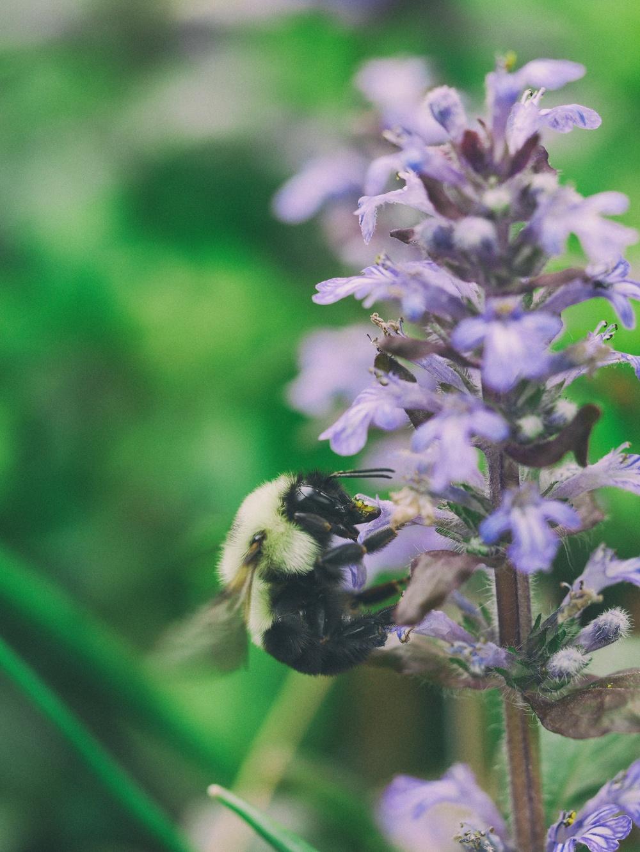 Spiritual Bee.jpeg