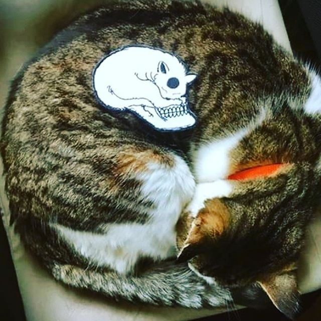 Cat skull patches and enamel pins still available in the shop. #catskull #catpatch #skullpatch #jessicalouise #idontgiveameow