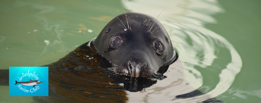Seals Healing