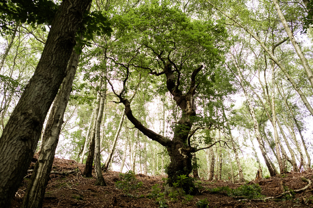 07.31.2016 Dimmingsdale Walk Photowalk Staffordshire Ramblers Retreat Trees-58.jpg