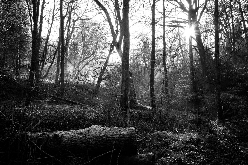 Staffordshire Photowalk Consall Forge Consall Nature Reserve The Black Lion Winter Cold Frosty-49.jpg