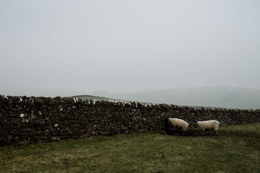 Get Some Fresh Air Photowalk Dovedale Fog Mist Cold Winter River Dove Ilam Sheep Landscape-40.jpg