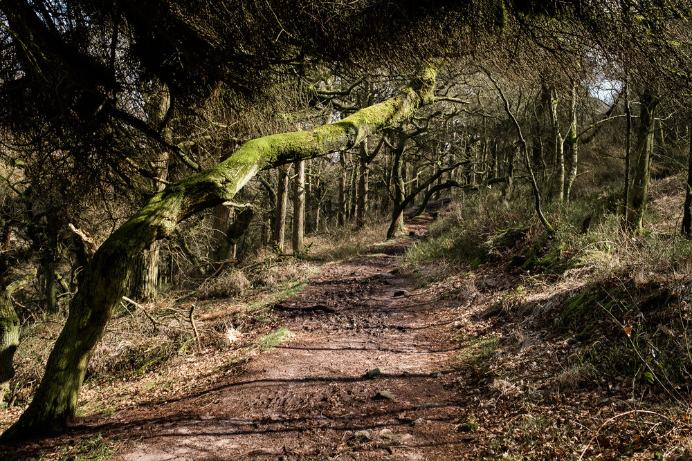 03.23.2017 Photowalk with Get Some Fresh Air The Roaches and Lud's Church Ludchurch Staffordshire Upper Hulme Ridge Rocks-42.jpg