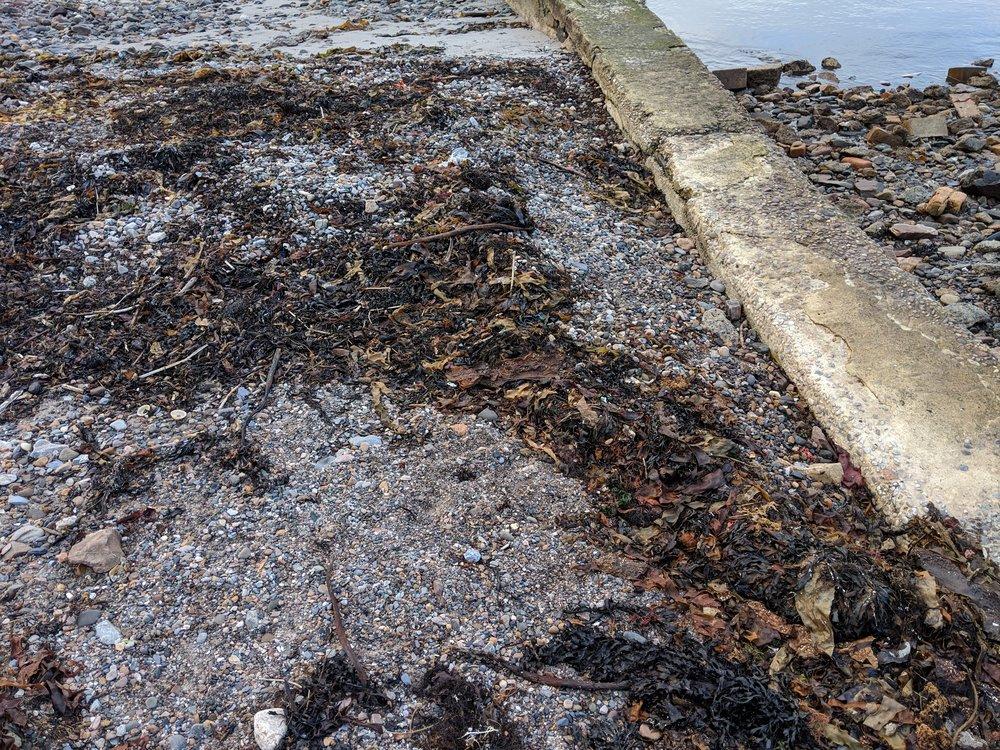 A closeup of that sweet, sweet seaweed
