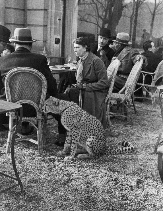 Woman with cheetah 1963 Paris cafe.jpg