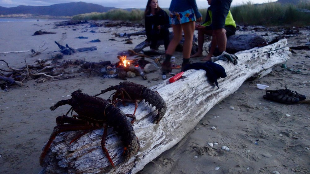 The days usually consisted of an early morning Deer hunt, followed by a kiwi stalk. We'd then head to the beach, read our books, before jumping in the water to grab lunch and dinner (paua and crays). Finishing up with a bonfire till the sun set around 10pm.