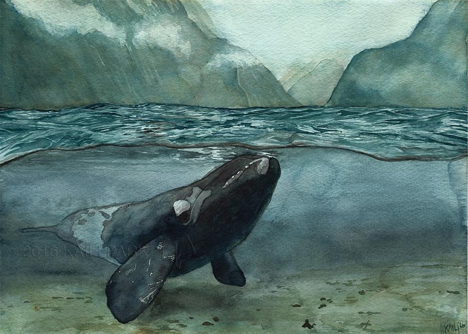 whale watermark.jpg