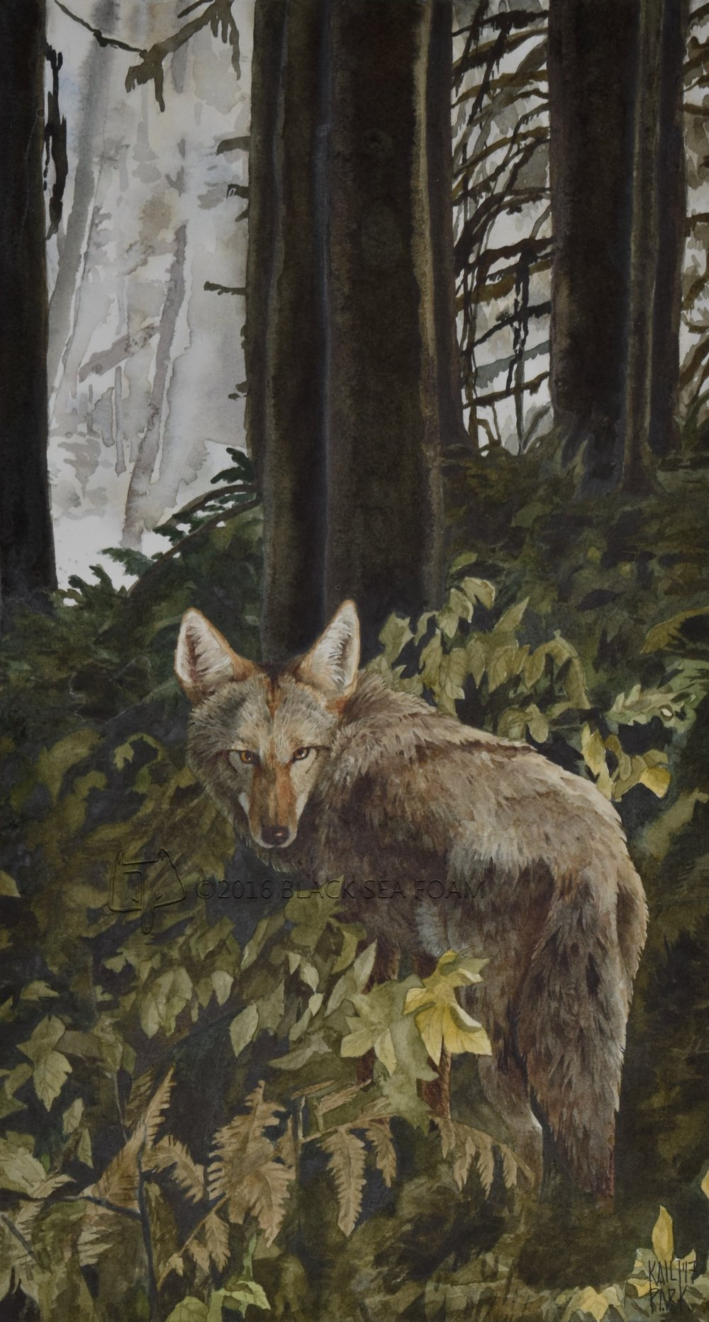 coyote+web.jpg