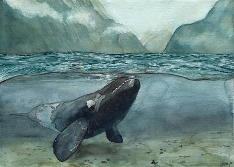 whale+watermark.jpg
