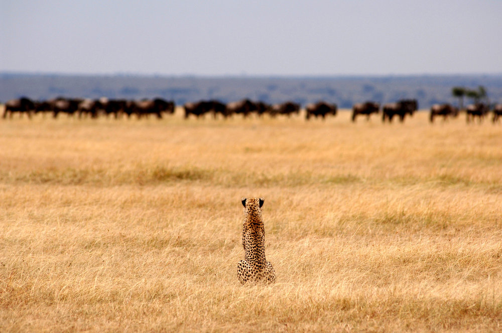 3.Serengeti Safari Camp-Here & Away.jpg
