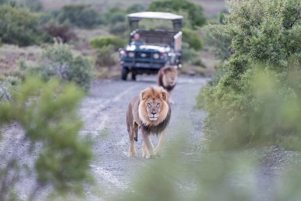 Durban Safari Hluhluwe Transfer Shuttle
