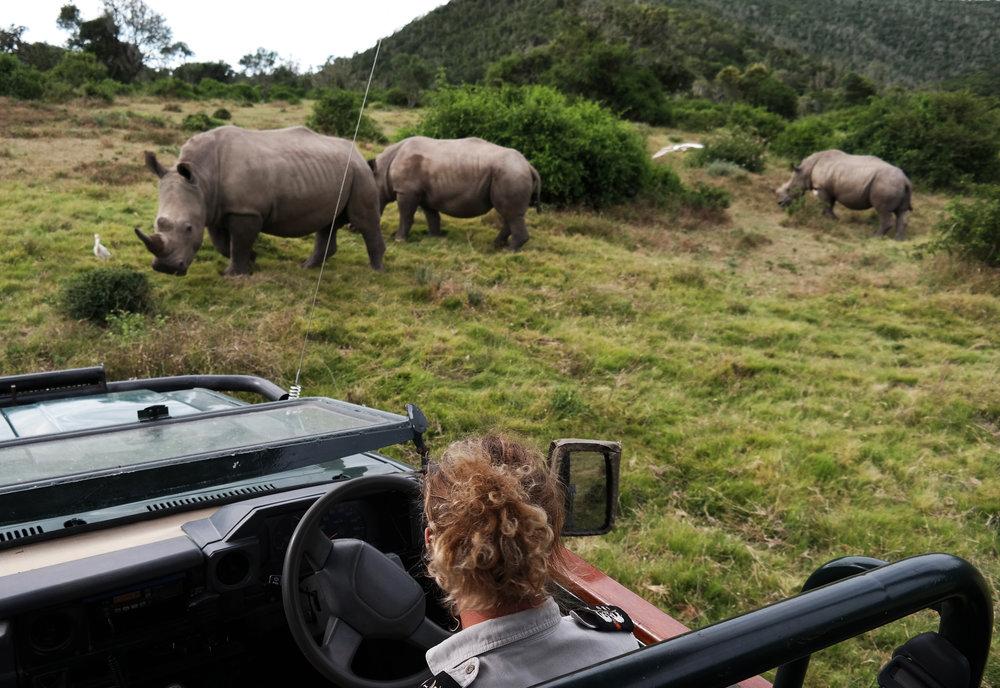 Rhino Game Drive.jpeg