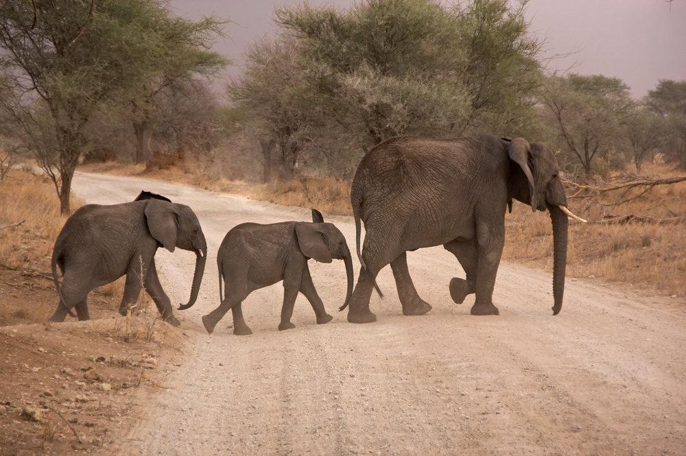 Elephant Mum & Kids.jpeg