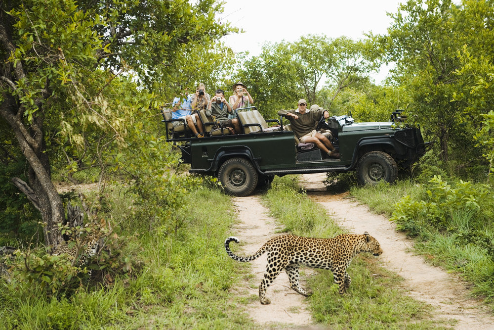 Leopard Game Drive.jpeg