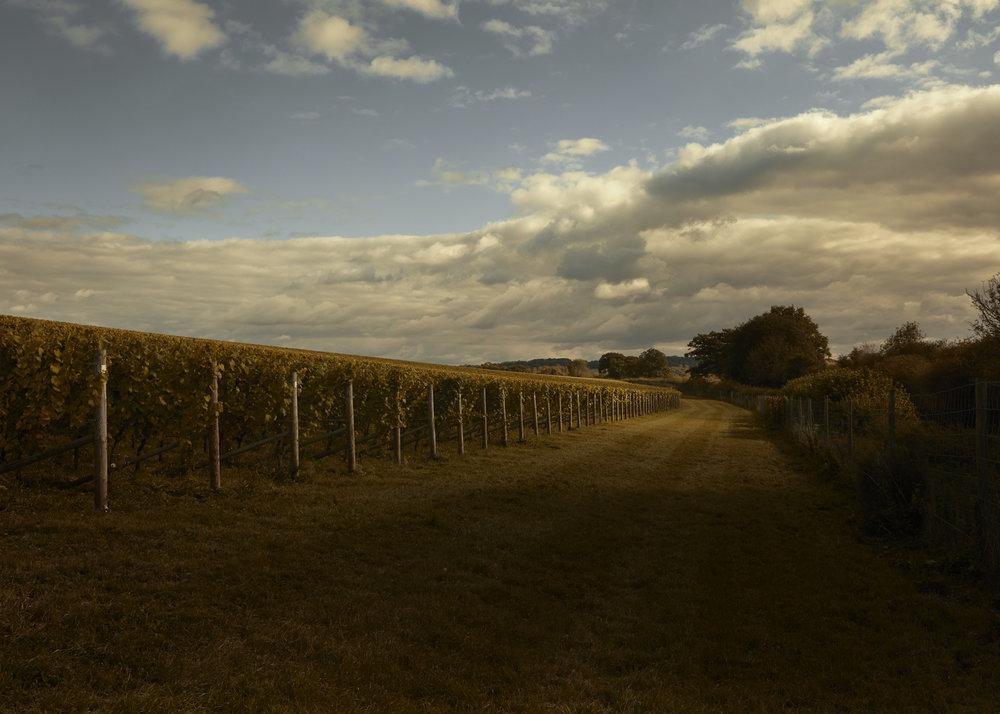 Vinyard_Landscape_Countryside_England_TomBunning_photoagent_Flock