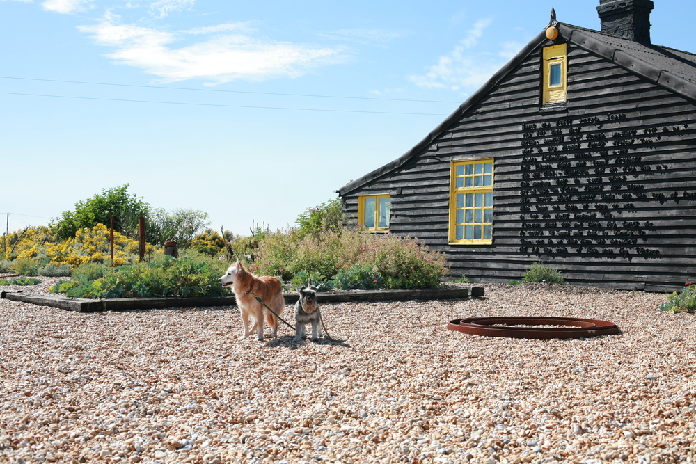 Just some of the Dungeness pebbles, at Prospect Cottage