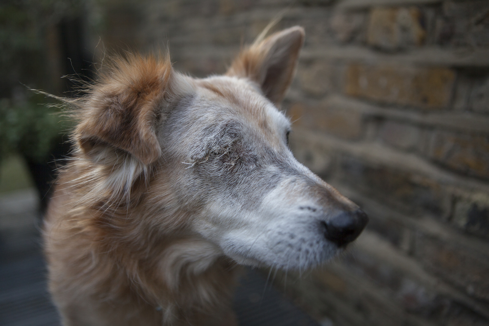 Five days after the operation, the stitches healed well(Photograph: Simon Willows)