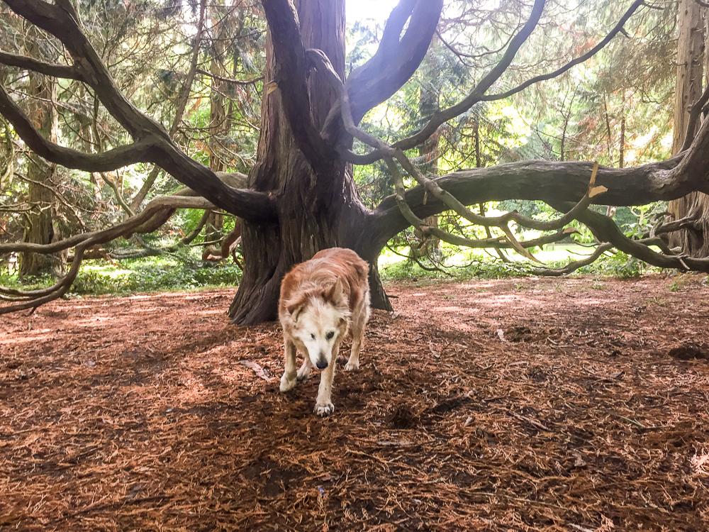 Pippa enjoying a shady spot (Photographs: Nina May)