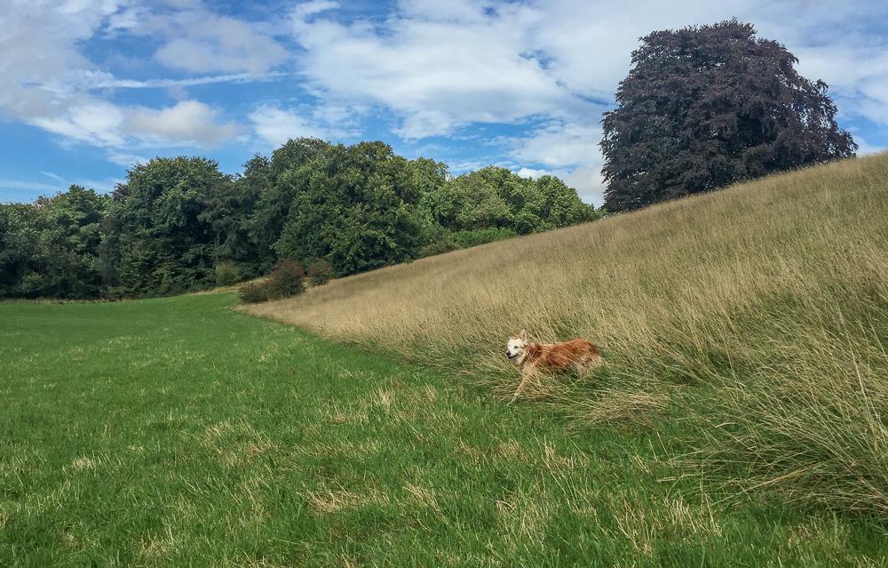 The field of joy