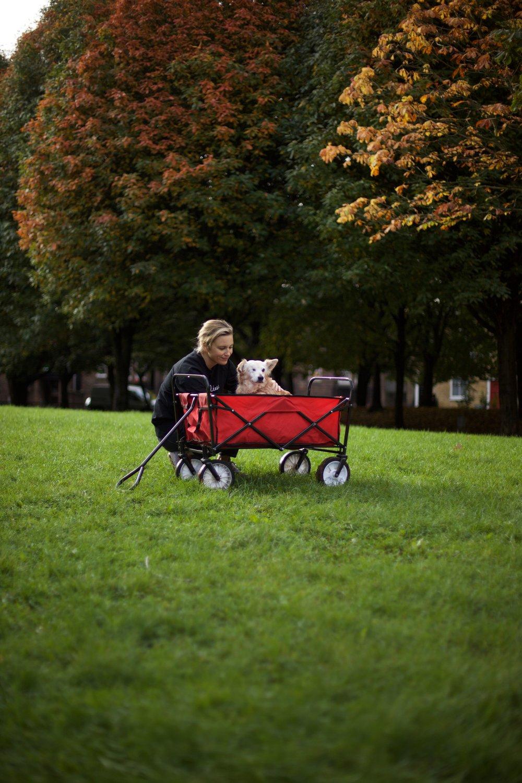 cart by Simon.jpg