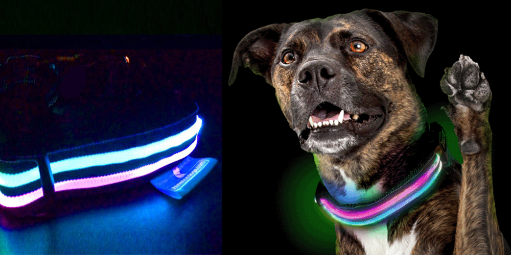 Shine For Dogs safety collar