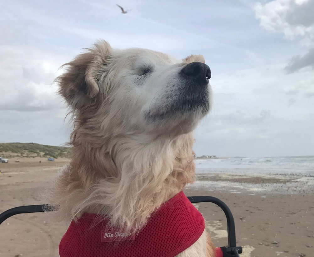 A last nose full of sea air in Camber Sands. Our friends helped get your cart across the dunes