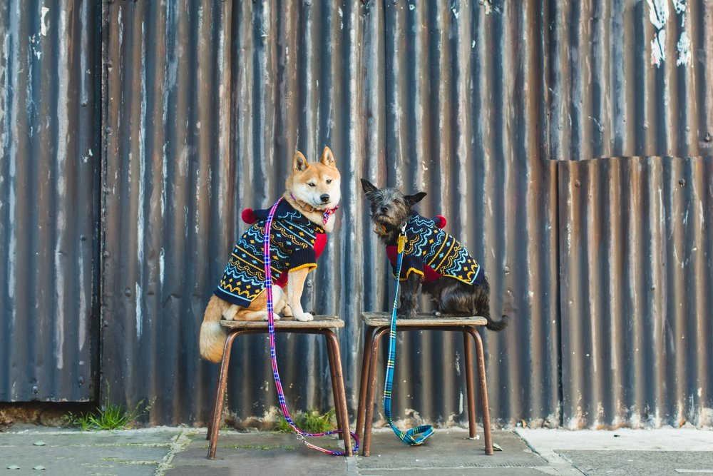 Hiro and Wolf are ready for the holidays (photos: Grey Dog Photo Studio)