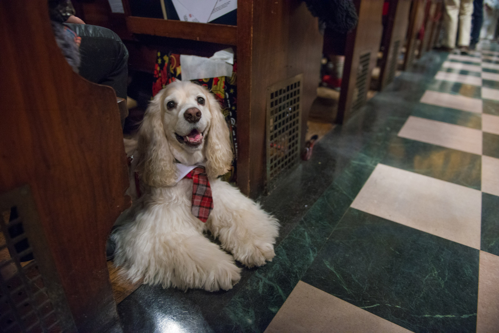 Max Cocker-Spaniel brushed his ears and put on his best tie for church. He was so excited that he came early, took a pew and greeted everyone with equal enthusiasm.