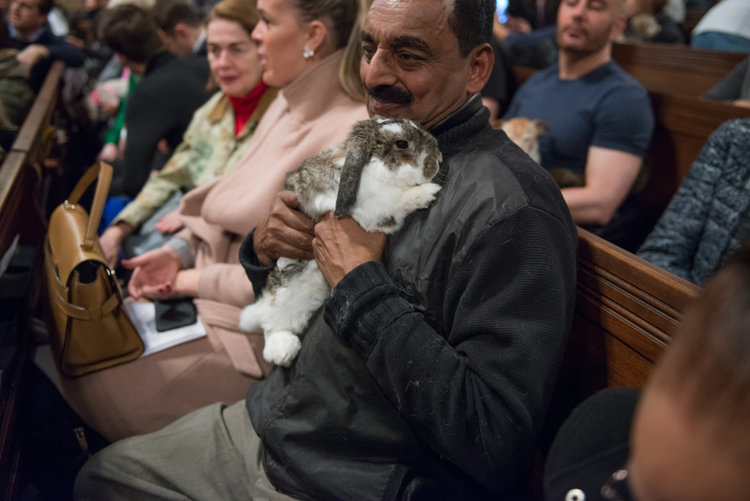 This is Patrick the bunny. Since it's not Easter, it's his time off from work, so he was able to enjoy church and shed some fur on his loving owner.