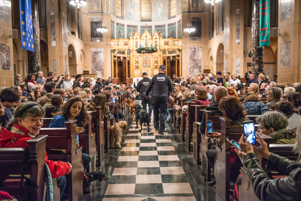 Some of Balto's colleagues still in work came with their NYPD humans. The k-9 unit could hardly contain their excitement, greeting everyone on the way to the altar.