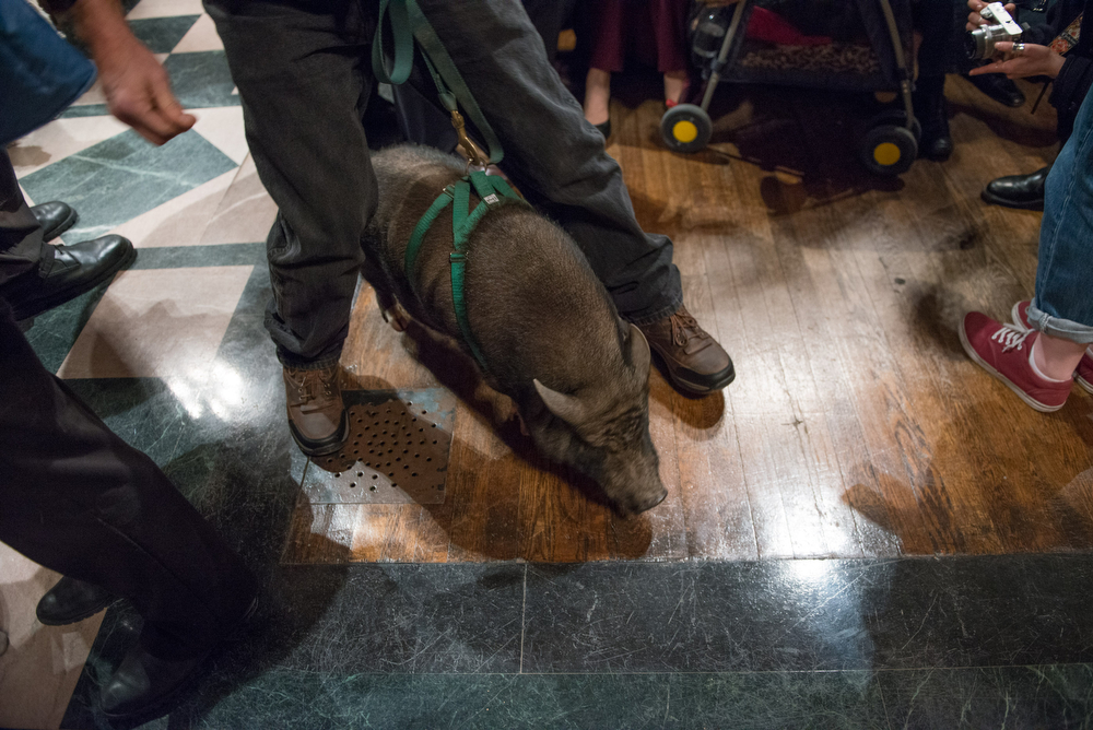 This little piggy came to church in a festive green harness. Christmas really has come early.