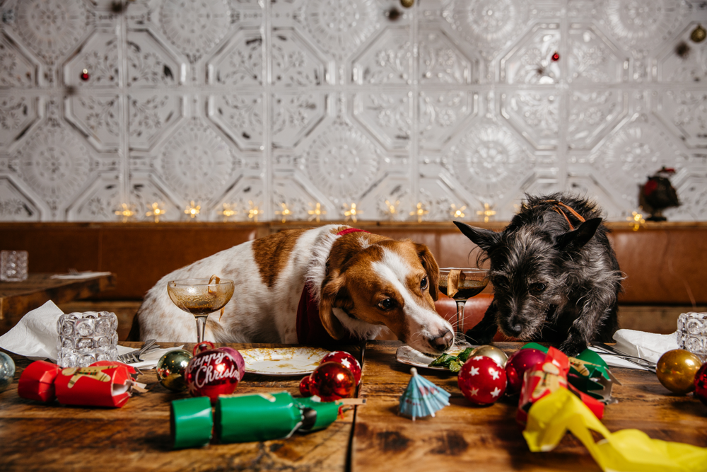 Flatmates Minnie and Wolf are sharing (not necessarily equally) a Christmas dinner at Shane's on Canalside (all photos: George Baxter)