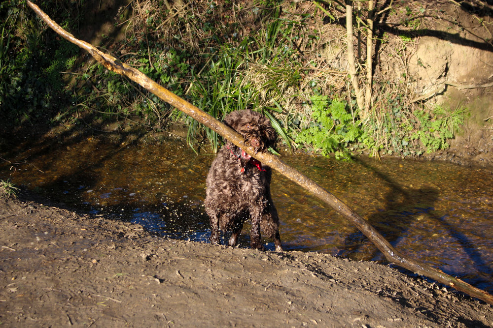 Rolo is looking to add stick-rescuing to his skillset