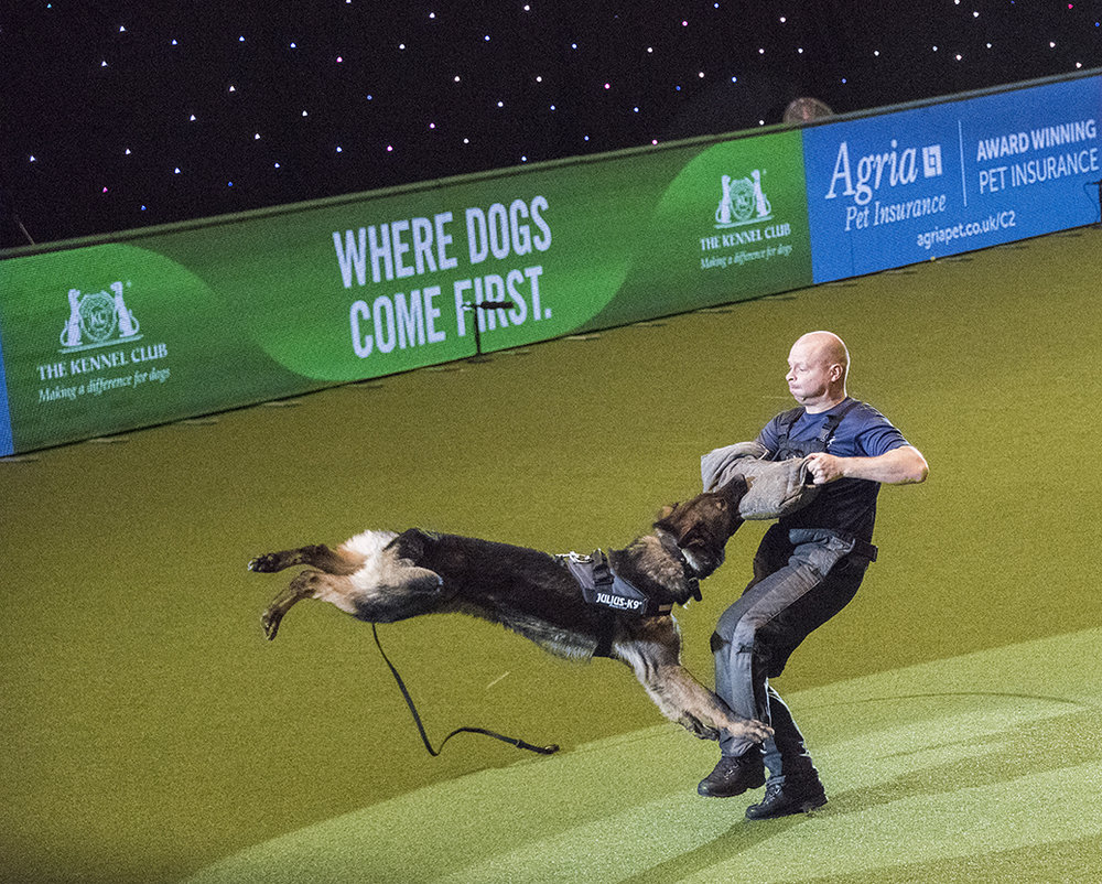 A West Midlands police dog is not going to let this go (photo: Ruth Downing,Rural Pictures Multimedia)