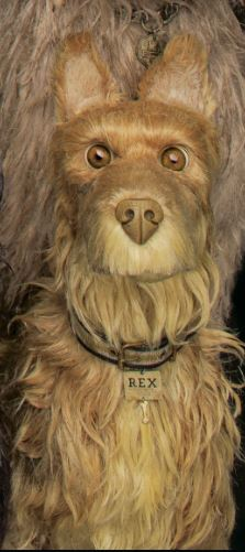 Rex jpg-1.JPG