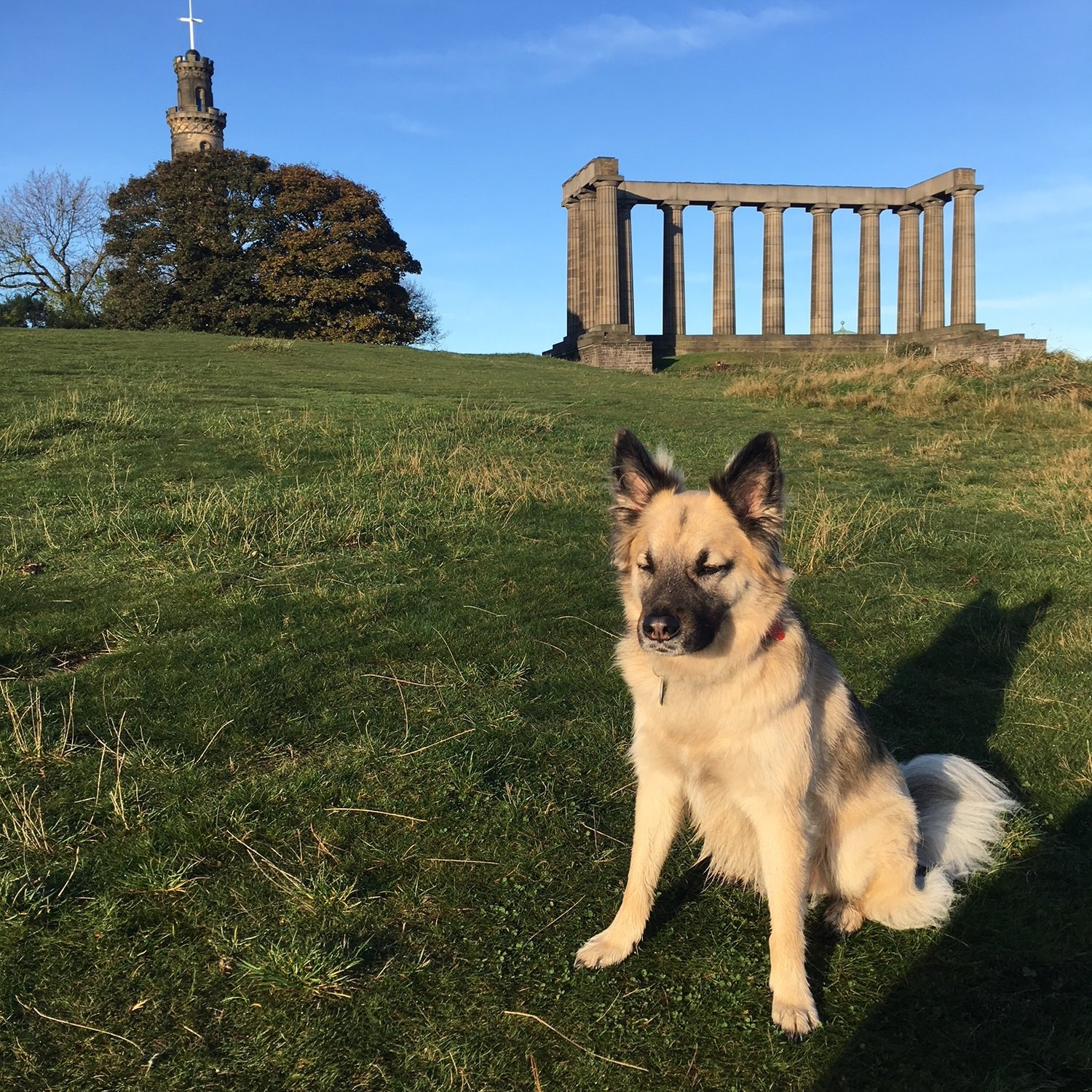 Yes, great view, but the grass is really why I come to Calton Hill