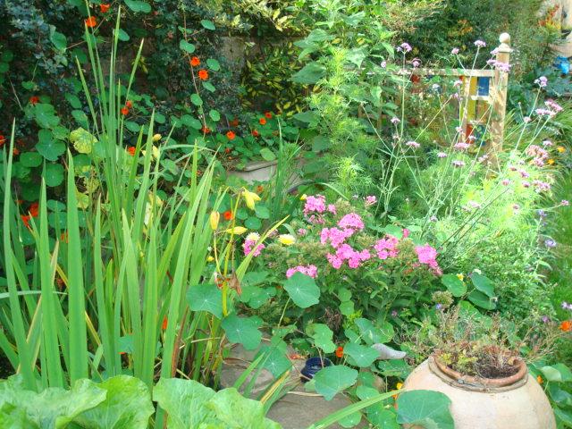 Garden pix Sept 2010 006.jpg
