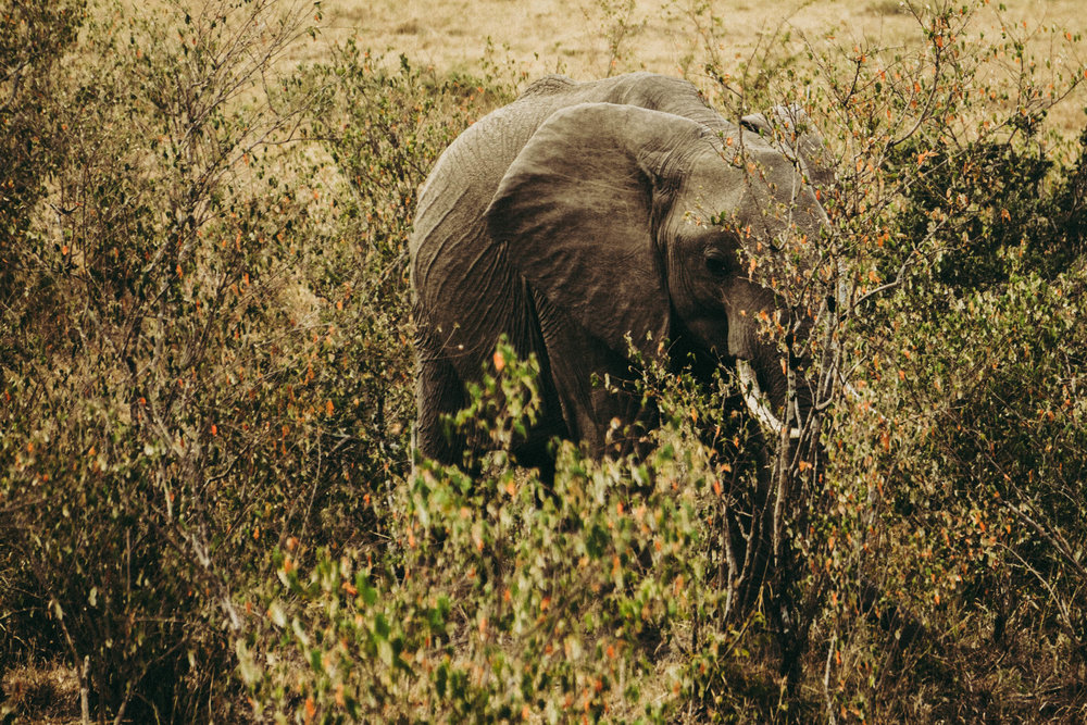 Safari-11.jpg
