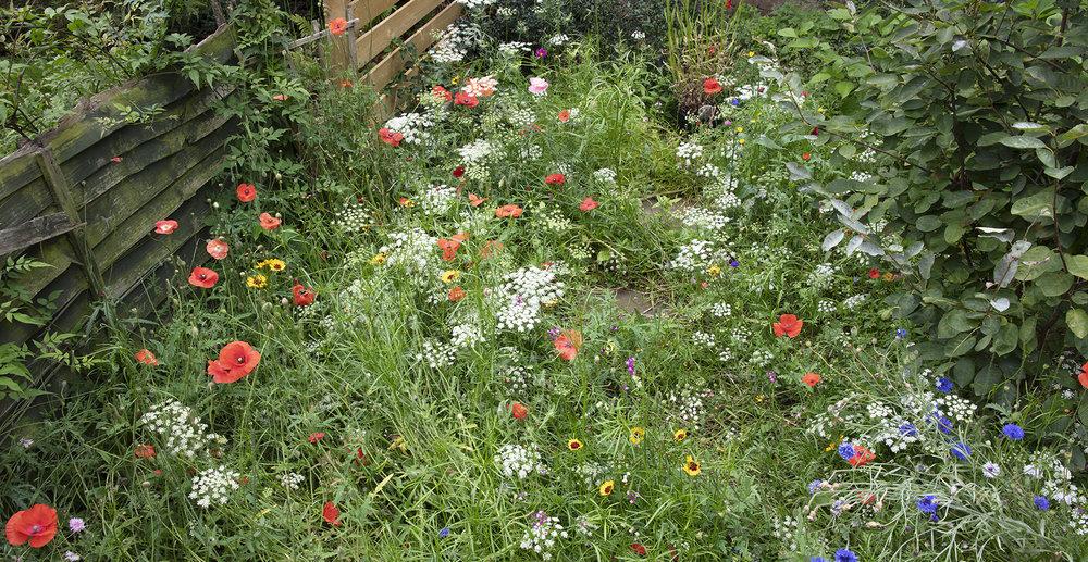 Garden shot 1 cropped.jpg