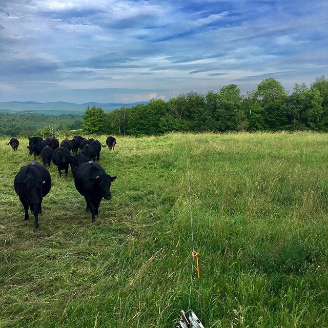 Well, over the last 24 hours we've fertilized, fertigated, inoculated, mulched, seeded, agitated, and clipped - time to move to the next paddock!  #vermontbeef #grassfedbeef #lifeisgood #vtsummer #calaisvt #carbonfarming #regenerativeagriculture #vermontbyvermonters #projectdrawdown #climatesmartagriculture #localbeef #localvore