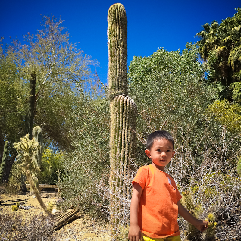 The Living Desert & Zoo