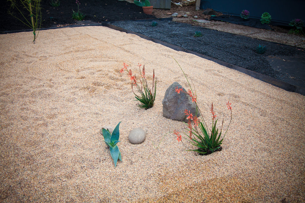 A few Aloe Striata plants and rocks from the old garden make for a small vignette. At the last minute, I decided to add these plants and rock, which is one of our favorites parts of the design.