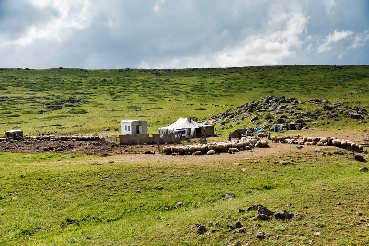 Yazidi encampment on Mount Aragats