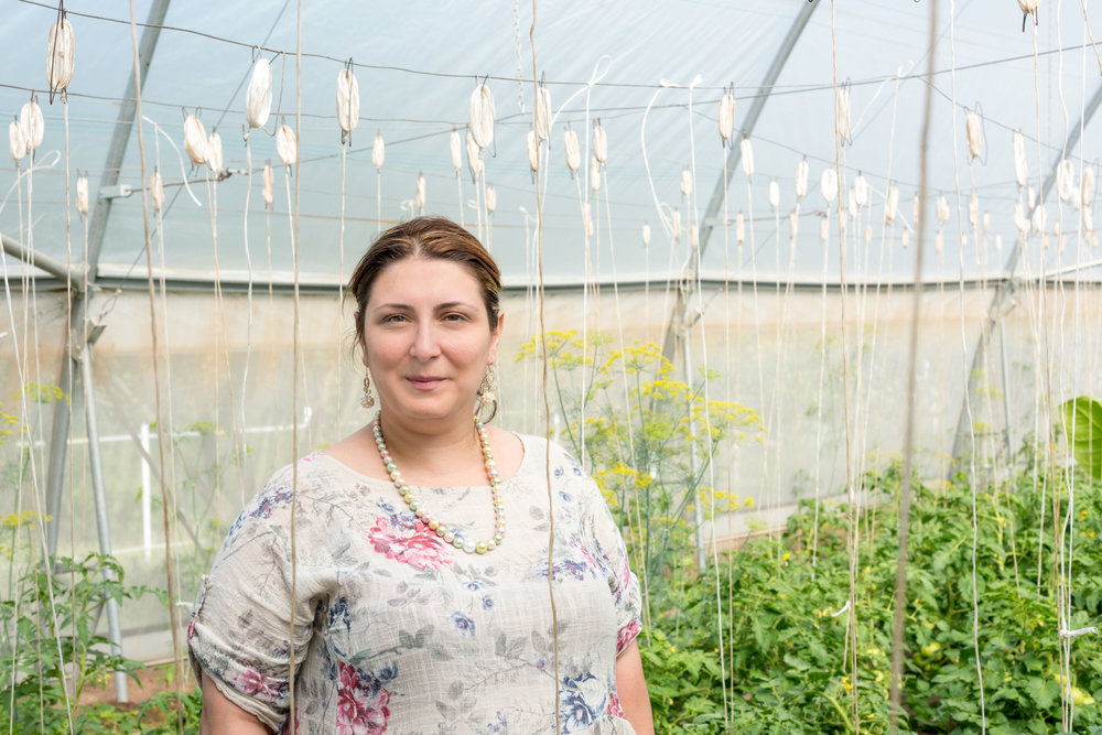 Lusine Grigoryan, FAR's Berd Office Director, in one of the greenhouses FAR has provided for economic development in Tavush.