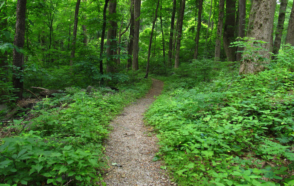 Austin Veile Nature Trail  -   A Destination and Passage