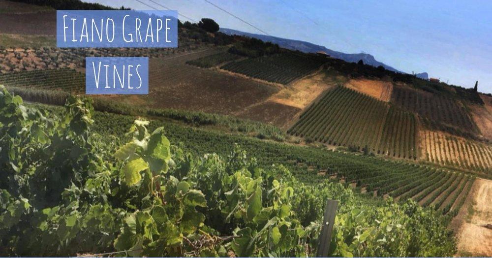 Tenuta Dei Mille Fiano vineyard