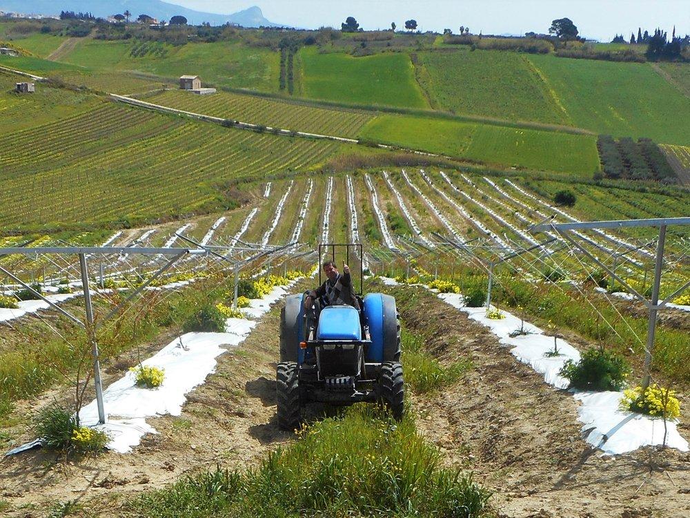 Tenuta Dei Mille- Enzo in the field