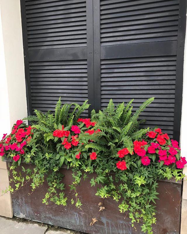 Charleston, SC windows with beautiful #flowers. #photo #travel